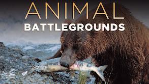 Animal Battlegrounds thumbnail