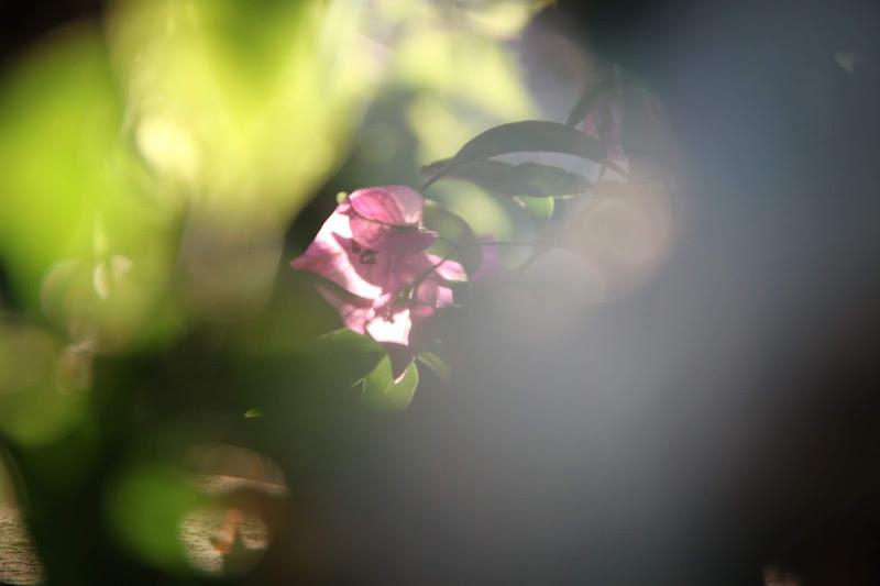 Timida primavera  di ele23