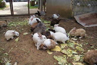Photo: Rabbits
