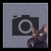 Cat Bomb Camera