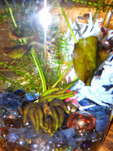 Photo: This Banana Tree is in our fish tank. its root look like green banana fingers