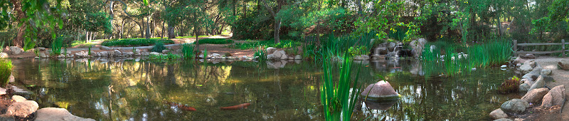 Photo: Descanso Gardens, Los Angeles, CA, Fish Basin  Late Afternoon, the Sun is already very low and draws this nice light/dark pattern into the park. A peaceful moment, shortly before the park closes and people are already on the way out. :o)  #breakfastclub