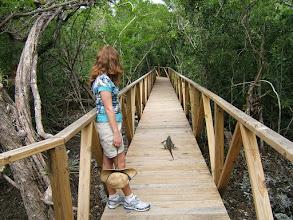 Photo: Cayman's Blue Iguana on the new Orchid Garden boardwalk at the Botanic Park. Photo: Ann Stafford, Feb.13, 2010
