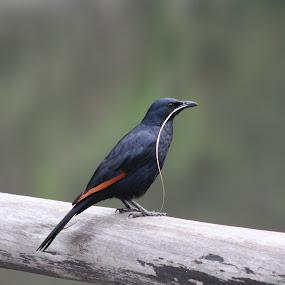 by Isak Meyer - Animals Birds