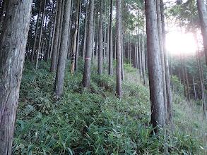 暫くは植林帯を登る