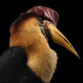 Royalty by John Larson - Animals Birds