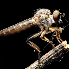 MR ROBBERFLY by Ayoe Artstudio - Animals Insects & Spiders