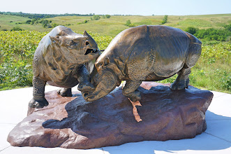 Photo: Two barrel-bodied rhino bulls battling it out.