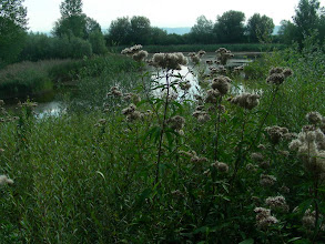 Photo: L'étang d'Arnex