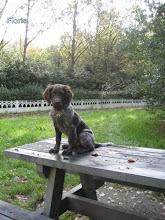 Photo: FLORIS puppy
