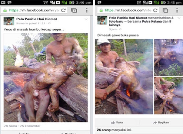 A resident of Indonesia's Central Kalimantan province barbecues an endangered Bornean orangutan for dinner. Authorities moved to arrest the man after he posted the photos to social media. Photo credit: Facebook