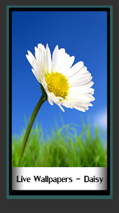 Live Wallpapers – Daisy - náhled