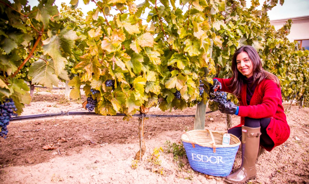 Wine Weekend Harvest experience Emina Rueda