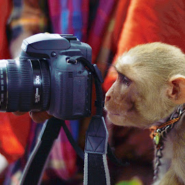 Upcoming Street Photographer by Sourav Das - Uncategorized All Uncategorized
