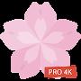Flower Wallpapers 4K Backgrounds Flora временно бесплатно