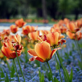 by Ivanka Ruter - Flowers Flower Gardens
