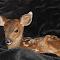 deer 15 005 - Copy.JPG