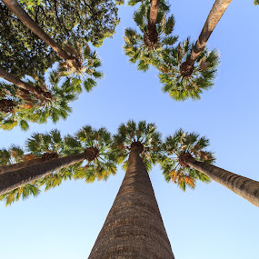 The big palm trees by Diogo Ferreira - Nature Up Close Trees & Bushes ( sky, greece, palm trees, athens, day,  )