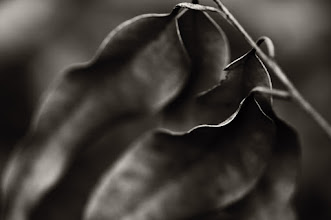 Photo: goodnight folks...  #bwphotography  #monochrome  #leaves