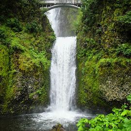 Mistical Multnomah Falls by Ally Skiba - Nature Up Close Water ( water, oregon, explore, portland, waterfalls, waterscape, green, lush, forest, landscape, breathtaking, nature, multnomah falls, nature up close, bridge, hike, mist )