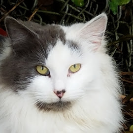 Junkyard Kitty by Anne Johnson - Animals - Cats Portraits ( wild, cat, junkyard, feline, feral,  )