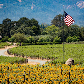 Sunflowers and Wine by Craig Turner - Landscapes Travel ( flowers, napa, sunflowers, ca )