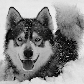 by Kari Schoen - Black & White Animals
