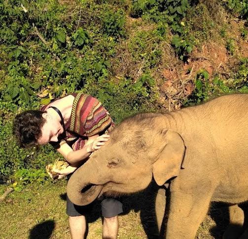 Karmienie słonia bananami