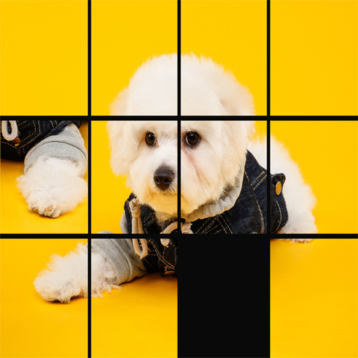 chiots puzzle