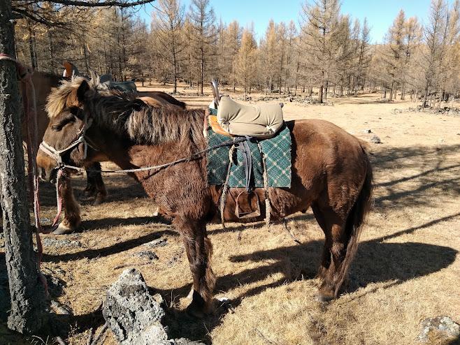 今回乗せてくれた馬