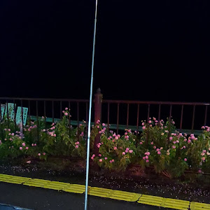 フェアレディZ PZ31のカスタム事例画像 まちあきさんの2021年09月07日14:43の投稿