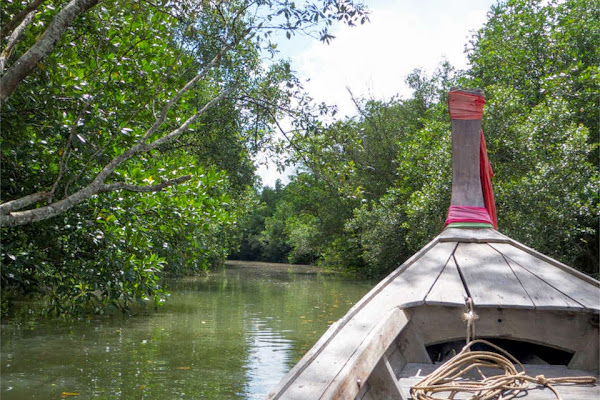 Cruise through the small canals of the protected mangrove forest in Krabi