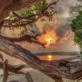 Through the woods by Vikas Jorwal - Nature Up Close Trees & Bushes ( orange, beautiful, sunrise, beach, morning,  )