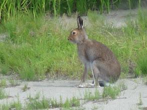 Photo: Ну сколько можно позировать! Вы зайца никогда не видели?