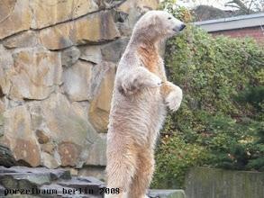 Photo: Das muss Knut unbedingt im Auge behalten ;-)