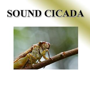 Cicada - náhled