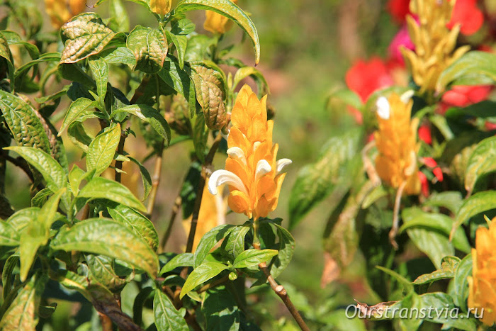 Цветочные сады Чук Лама, Далат
