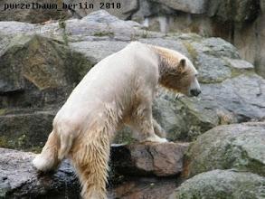Photo: Und nun wieder aufs Trockene, meint Knut :-)