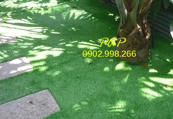 Chọn Cỏ sân vườn với mức giá tương tốt nhất