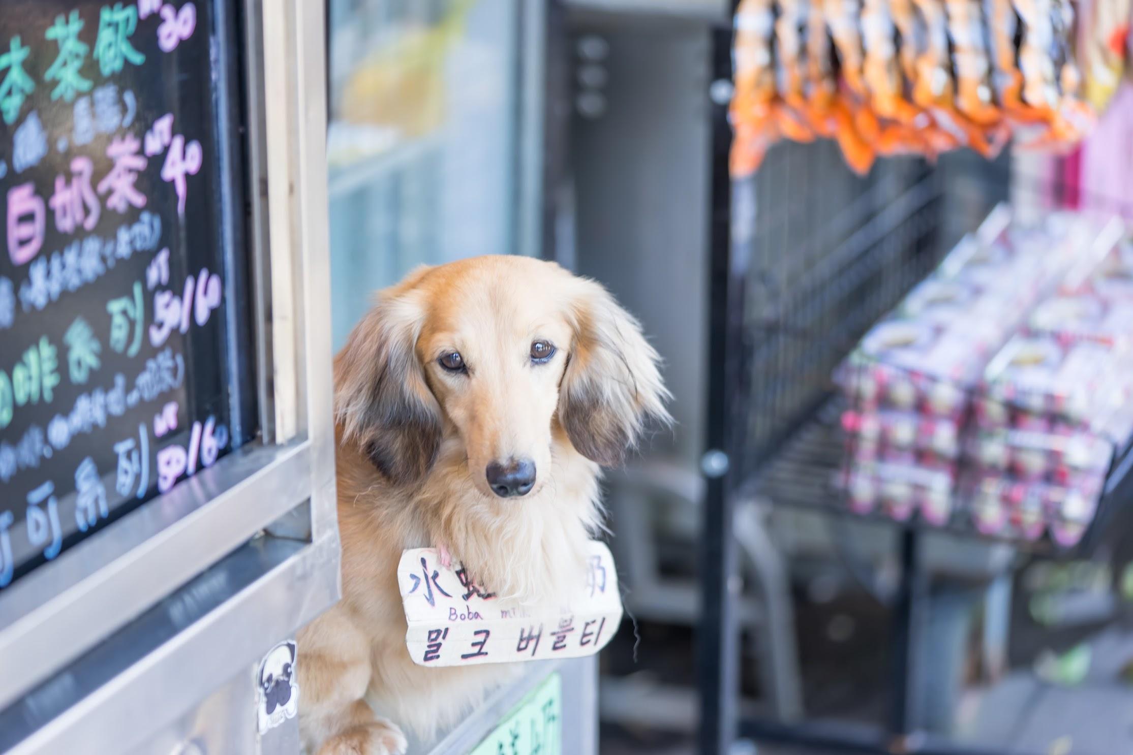 Taiwan Pingxi Line Shifen dog
