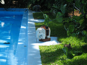 Photo: The pool at Hemingway House