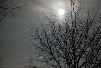 Photo: arbre de Serrasants + la lluna