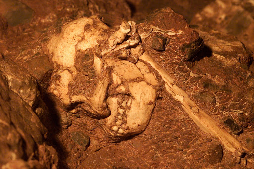 "The skeleton sometimes referred to as ""Little foot""."