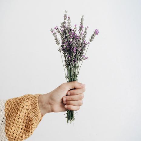 Kurs: Odla husapotek. En eftermiddag i läkeväxterna värld, 4 december