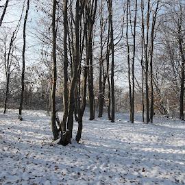 Зима by Georgi Kolev - Landscapes Forests ( сняг., небе., слънце., сенки., гора., зима. )