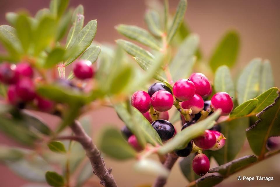 La imagen puede contener: planta, flor, exterior y naturaleza