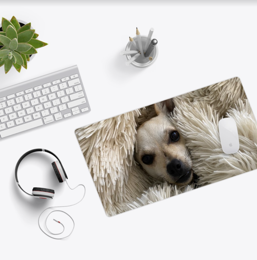 A dog wearing headphones  Description automatically generated with medium confidence