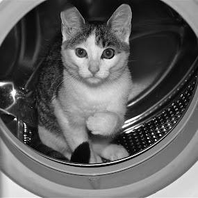 ziza 2 by Almasa Dalan - Animals - Cats Portraits