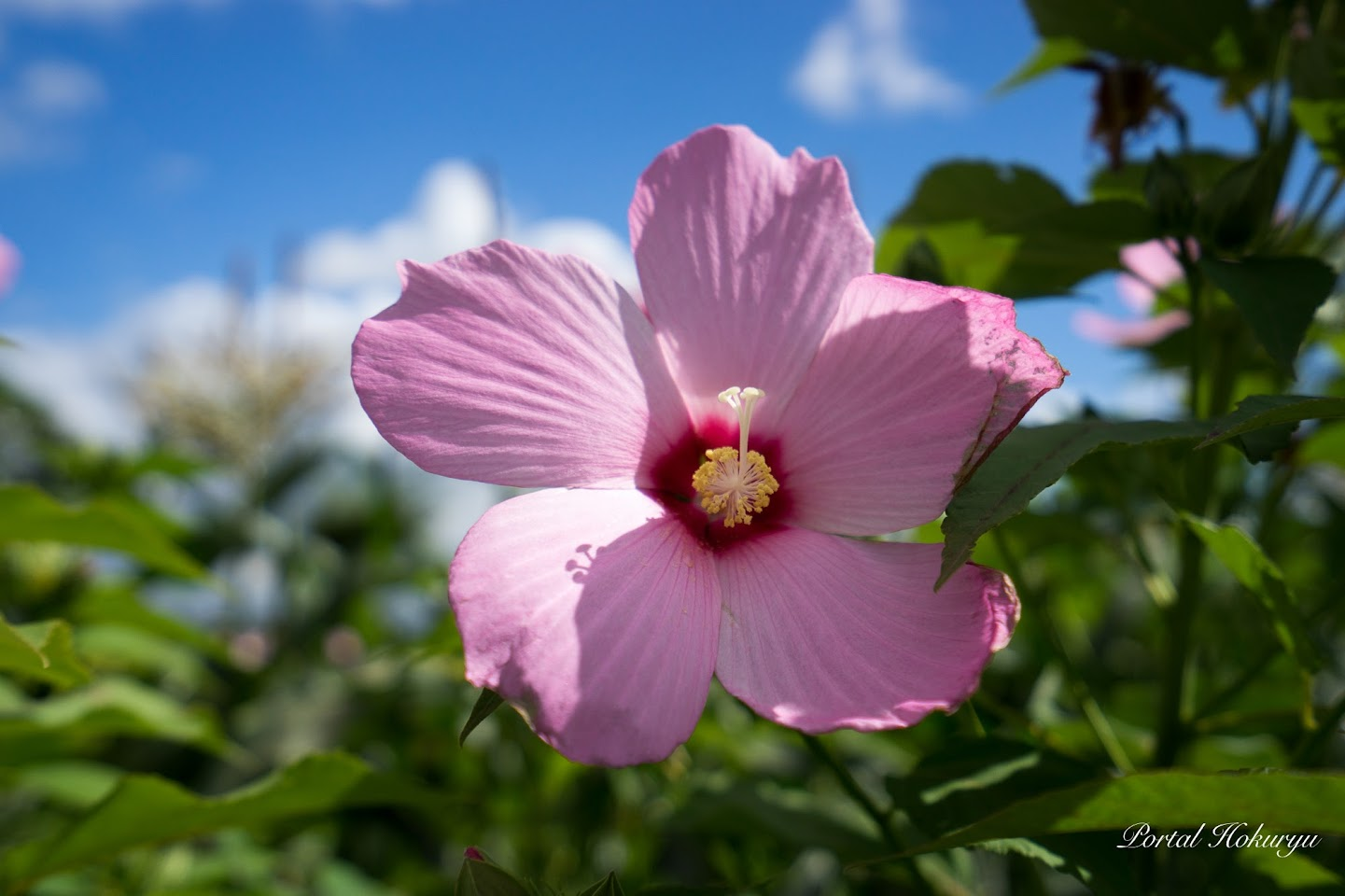 華麗なる花