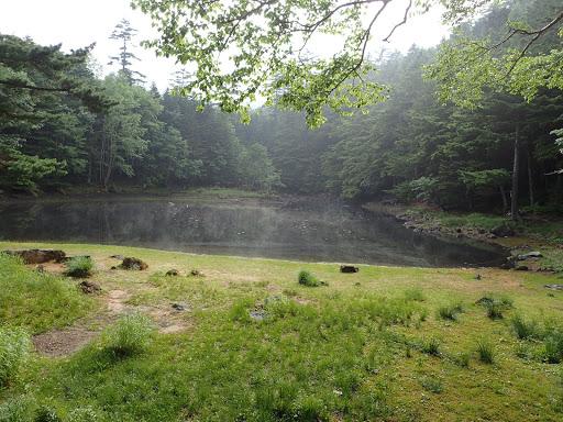 みどり池(キリが浮かんで)